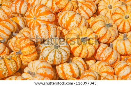 Colorful pumpkins collection on the autumn market