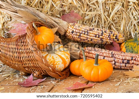 Colorful pumpkins, gourds and corn with straw background on a rustic wooden surface
