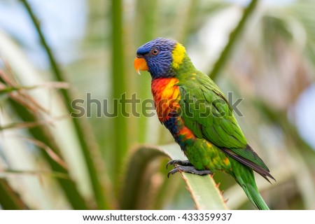 Colorful rainbow lory #433359937