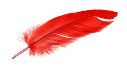 Colorful red feather isolated on white background, swan feather