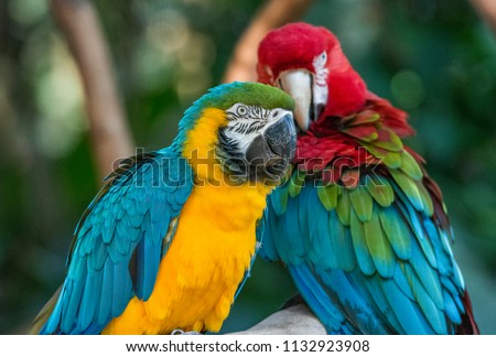 Photo of  Colorful red, yellow and blue macaws in Parque das Aves (Birds Park) in Foz do Iguacu, Parana State, South Brazil