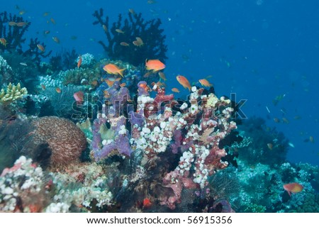 Colorful reef of Maldives