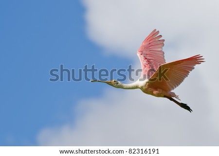Stock Photo colorful roseate spoonbill in flight against nice blue partly cloudy sky