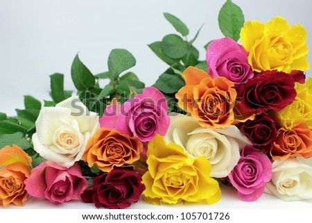 Colorful roses on grey background