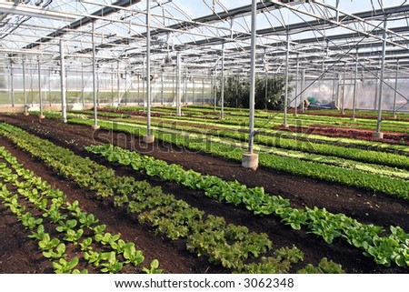 Colorful rows of seedlings in a greenhouse.
