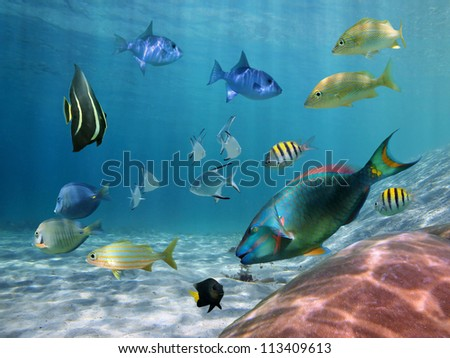 Colorful school of fish with ripples of sunlight reflected on the ocean floor