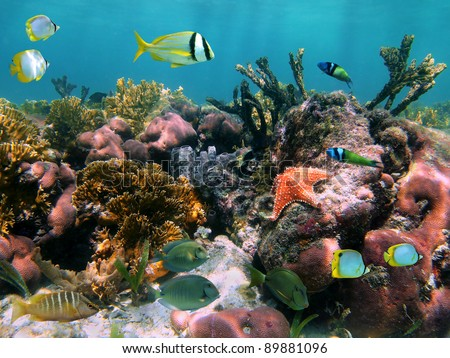 Colorful sea life in a coral reef with tropical fish and a starfish