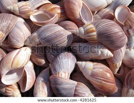 Colorful sea shell