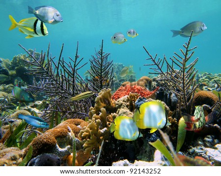 Colorful seabed with corals and tropical fish in the Caribbean sea