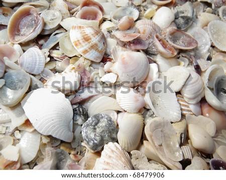 Colorful seashells at sunny Florida beach. - stock photo