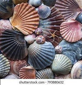 Stock photo of colorful seashells collected in South-Portugal, Europe