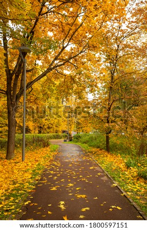 Colorful Seasonal Autumn With Wet Asphalt Road Way And With Listopad In Landscaped Scenic Park. Zdjęcia stock ©