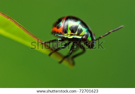 Colorful Shield Bug (Nypmh) - stock photo