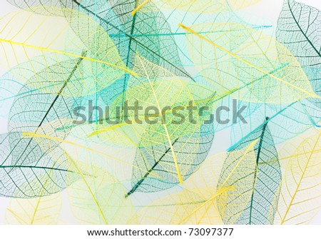 colorful Skeleton leaves ,close up for  background