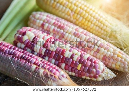 Colorful small ears waxy corns with silk, corn leaf and old wooden background. #1357627592