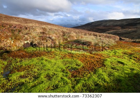 Colorful sphagnum moss in the southern Cairngorms, Scotland.