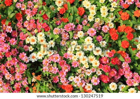 colorful spring flowers background