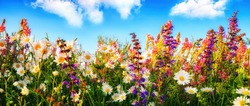 Colorful spring flowers on a meadow in panorama format, with the blue sky and white clouds in the background