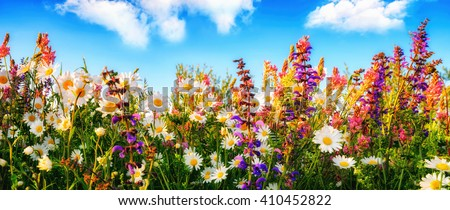 Shutterstock Colorful spring flowers on a meadow in panorama format, with the blue sky and white clouds in the background