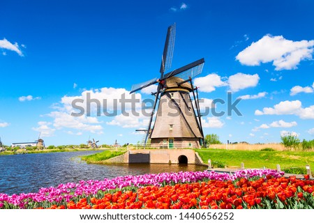 Colorful spring landscape in Netherlands, Europe. Famous windmill in Kinderdijk village with a tulips flowers flowerbed in Holland. Famous tourist attraction in Holland