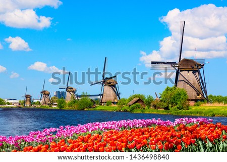 Colorful spring landscape in Netherlands, Europe. Famous windmills in Kinderdijk village with a tulips flowers flowerbed in Holland. Famous tourist attraction in Holland