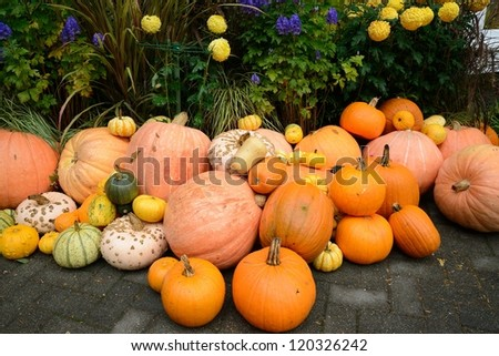 colorful squash in the harvest season