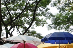 Colorful stall umbrella in natural green park