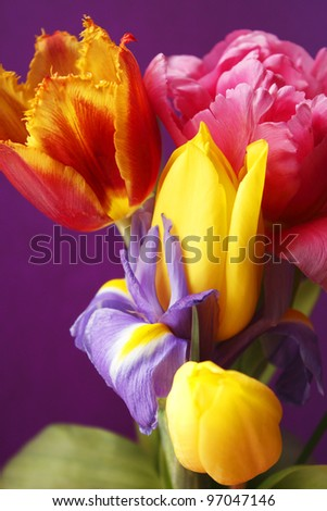 Colorful studio display of flowers in a vase with a purple background
