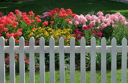 colorful summer flowers behind white picket fence