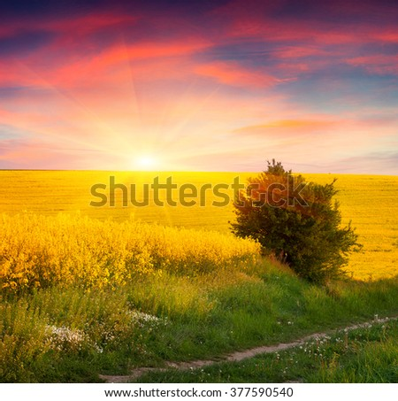 Colorful summer scene in the countryside. Sunrise on the field of blooming colza. Amazing landscape for advertisement using. #377590540