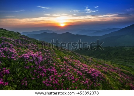 colorful summer sunrise landscape in the mountains with blossom flowers, America travel, east USA, wonderful world - Shutterstock ID 453892078