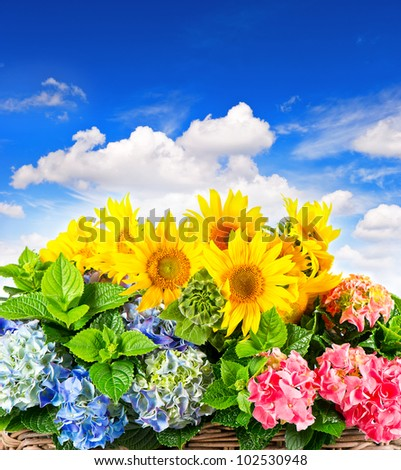 colorful sunflowers and hortensia blossoms over beautiful blue sky