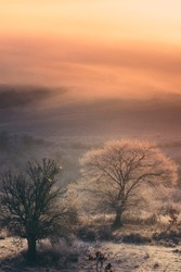 colorful sunrise light in landscape with fog and tree