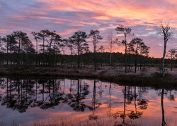colorful sunrise over bog, dark bog tree silhouettes, gorgeous sky reflections in dark bog lake, cold autumn morning, first frost on bog grass and moss, Latvia