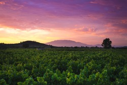 Colorful sunset at vineyard valley. Zakynthos island, Greece