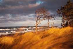 Colorful sunset beach dunes scene with pine tree forest at the coastline and ocean view and grass and moody colorful clouds sky. Weststrand. German Baltic Sea Darßer Ort, Weststrand coastline at Fisch