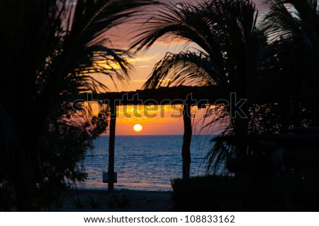 Colorful sunset in Mexico, holbox island, with palm tree in front