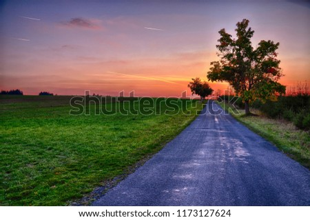 Colorful sunset with asphalt road and solitary trees at  autumn / fall ,time between golden hour and  blue hour. #1173127624