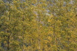 Colorful texture of treetops in autumn