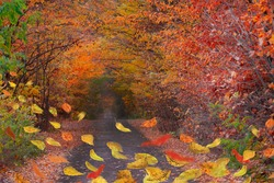 Colorful Thanksgiving autumn leaves in freefall. Autumnal mood background. Autumn mix leaves.