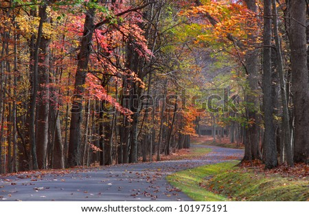 Colorful trees by the road in Babcock state park - stock photo