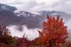 colorful trees in mountain. natural autumn background