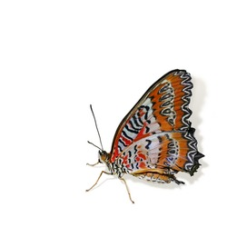 Colorful tropical butterfly isolated on white background