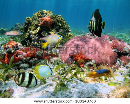 Colorful tropical fish and corals with starfish in the Caribbean sea
