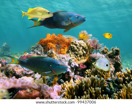 Colorful tropical fish and marine life in a coral reef