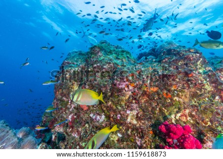 Colorful tropical fish swimming around a beautiful tropical coral reef #1159618873