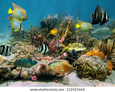 Colorful tropical fish underwater in a coral reef with sea sponges, Caribbean
