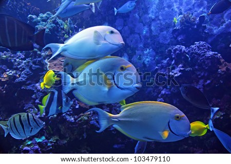 Colorful Tropical Hawaiian Pacific Fish in Aquarium Exhibit
