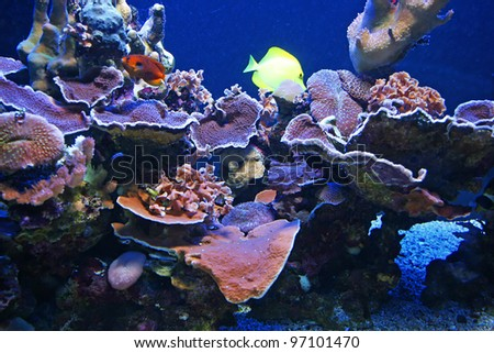 Colorful Tropical Hawaiian Pacific Fish in Aquarium Exhibit