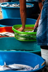 Colorful tubs of freshly harvested fishes for sale in a public market Davao Philippines